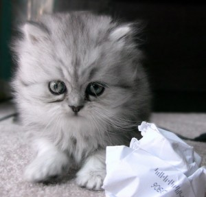 Kitty with paper ball