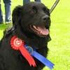 winner_Dog