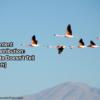 B2B Content Marketing Distribution -Research