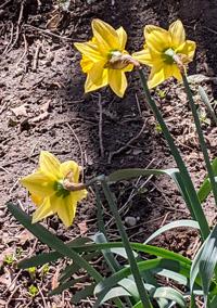 Gramercy Flowers