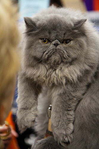 Why Social Media Marketing Is Like Herding Cats Cat