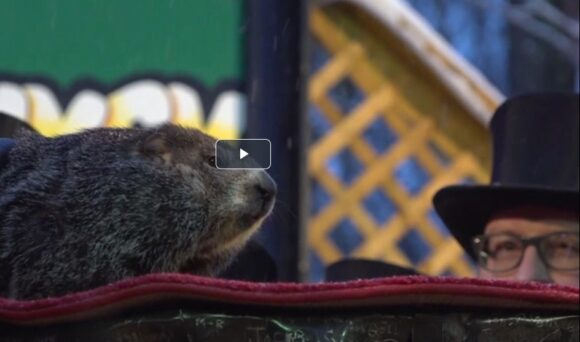 Virtual Groundhog Day impacts businesses