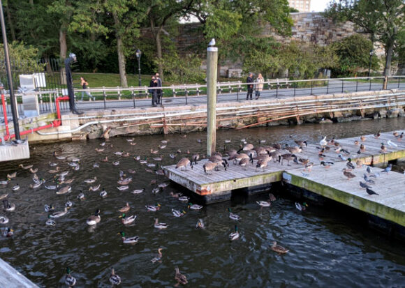 the birds of 79th street
