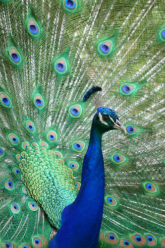 Does your content marketing stand out from the sea of other information like a peacock?