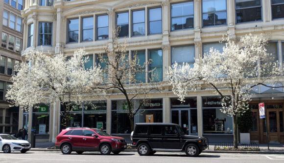 Braeford Pears on Sixth Avenue